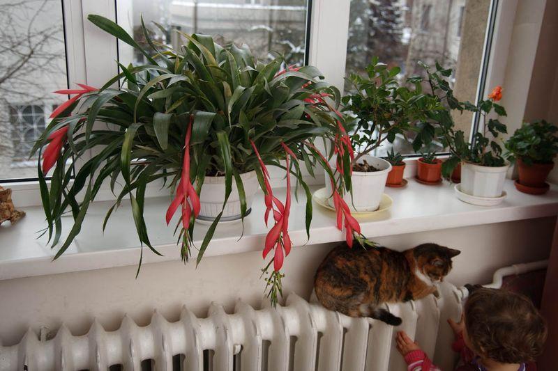 Drapka (Krabbeltje), Zuza en bloemen in de slaapkamer van mijn ouders