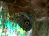 Nowy pawilon motyli w łódzkim zoo