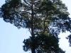Trees in Rogów Arboretum