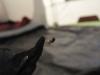 [:en]Spider[:pl]Pająk[:nl]Spin